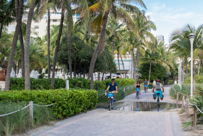 Several people cycling on a path lined with palm trees