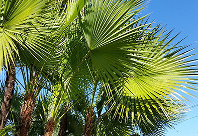 7 Summit Pathways signs with palm trees